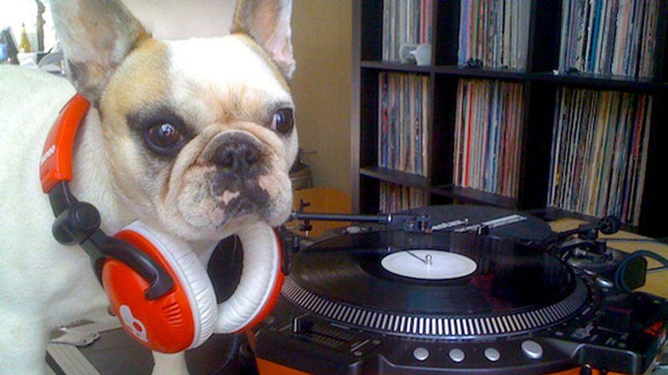 Video/ La musica è per tutti. Non crederai al talento da Dj di questo cucciolo!