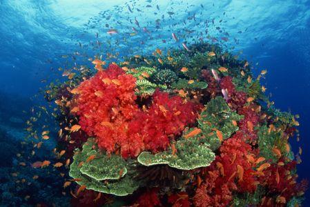 Sida : Du corail pour lutter contre la maladie ?