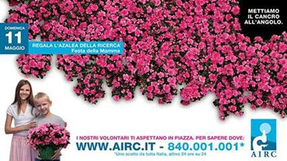 Un'azalea dedicata alla mamma per combattere il tumore femminile