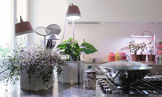 Cynara orto e piante in casa