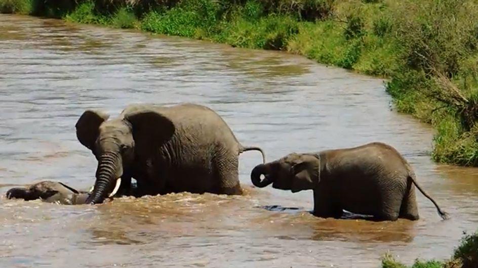 Wahre Mutterliebe: Was diese Elefantendame für ihr Baby tut, ist einfach herzzerreißend!