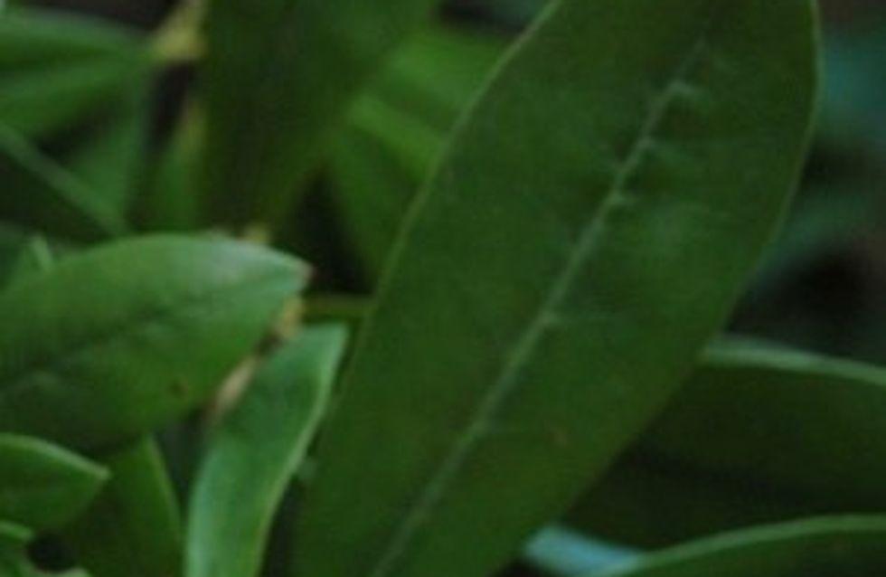La quiche