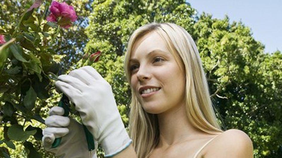 ¿Cómo proteger los rosales del frío?