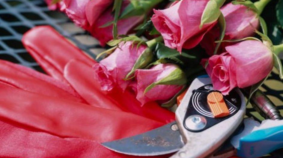 Saber podar los rosales