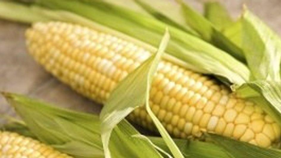 Todo sobre el maíz