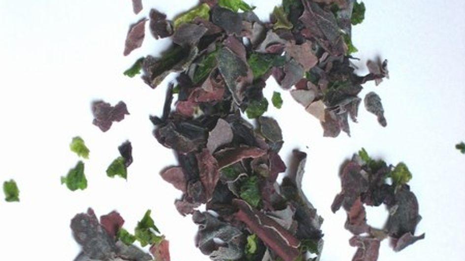Algas y tipos de algas