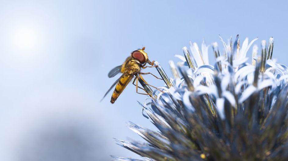 La vacunación ante la alergia a picaduras de avispas y abejas
