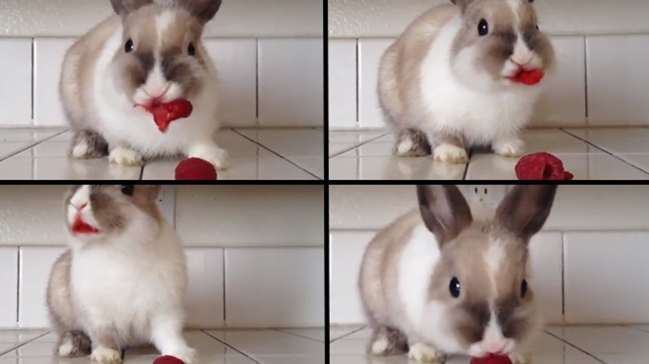 Video/ Buono il lampone... il coniglio che si gustava un lampone come nessuno mai!