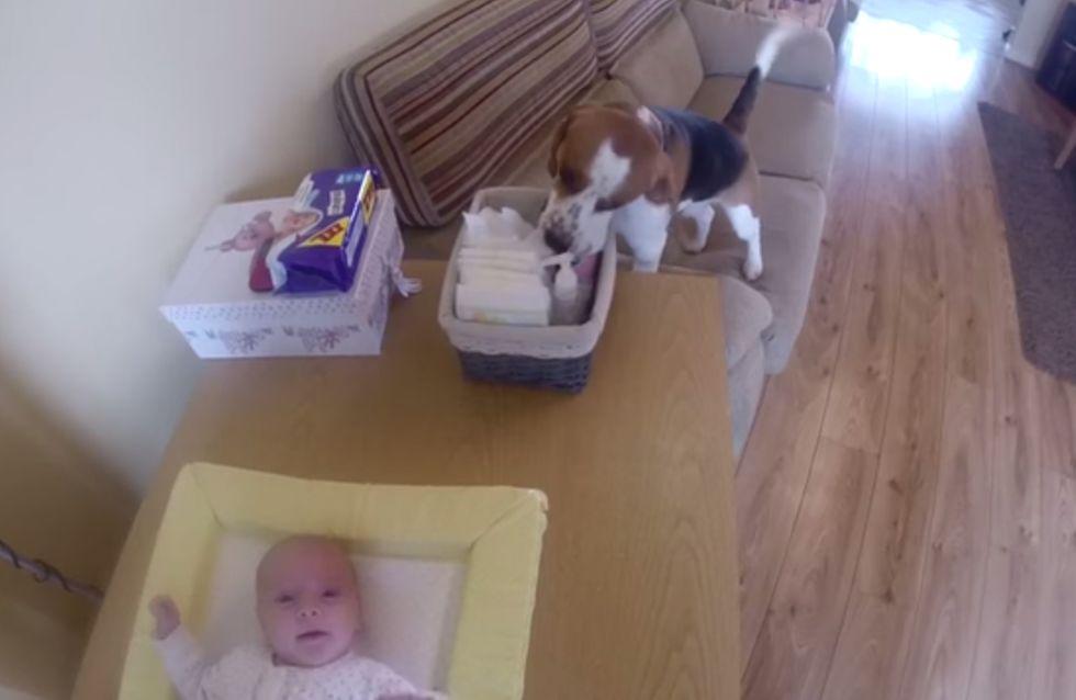 Un astuto perro ayuda a su dueña a cambiar los pañales al bebé