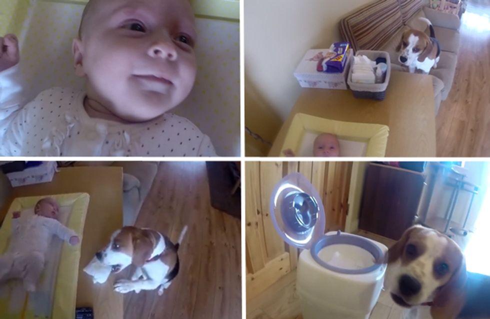 Video/ Un cane come baby sitter? Perché no, se sa anche cambiare i pannolini?