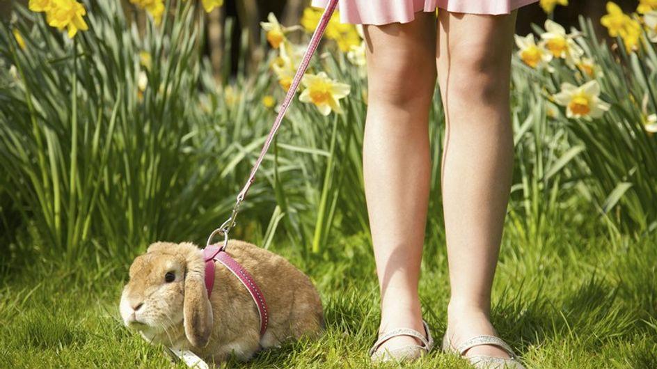 La UE prohibe definitivamente la experimentación en animales con fines cosméticos