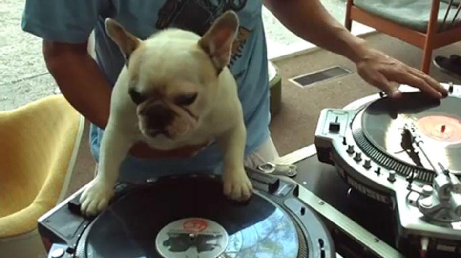 Un cachorro con un increíble talento como DJ
