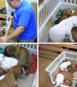 Video/ Ninna nanna e buona notte: funziona anche con i cuccioli! Non ci credi? G