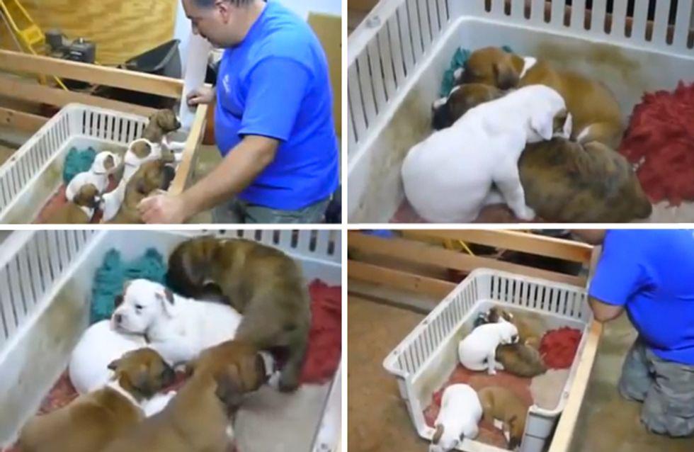 Video/ Ninna nanna e buona notte: funziona anche con i cuccioli! Non ci credi? Guarda questo video