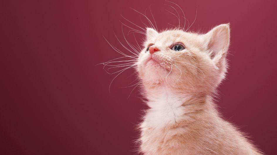 Insolite : Préférer les chats aux chiens rend plus intelligent