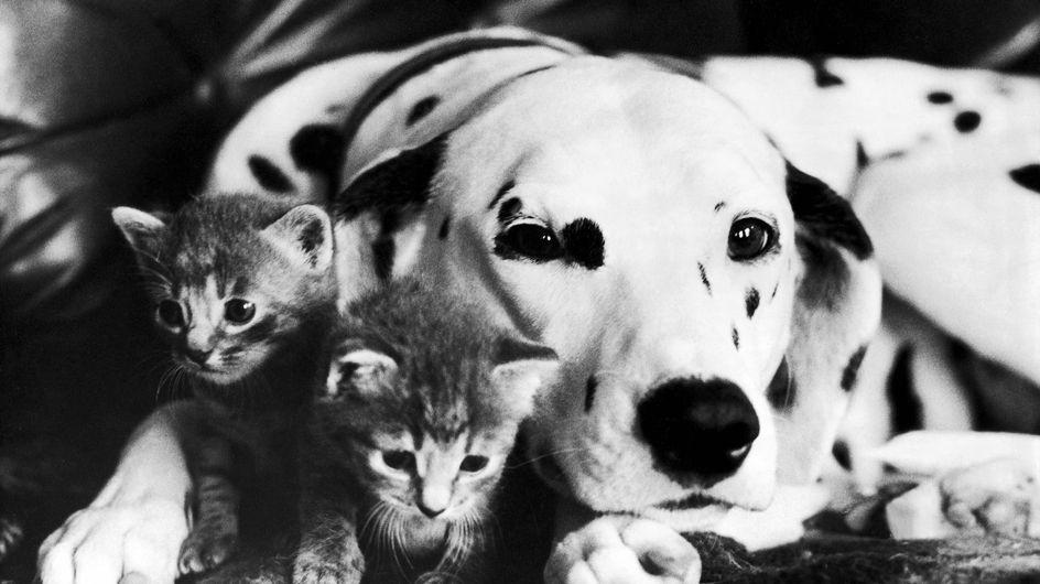 Los gatos dejan sin cama al mejor amigo del hombre