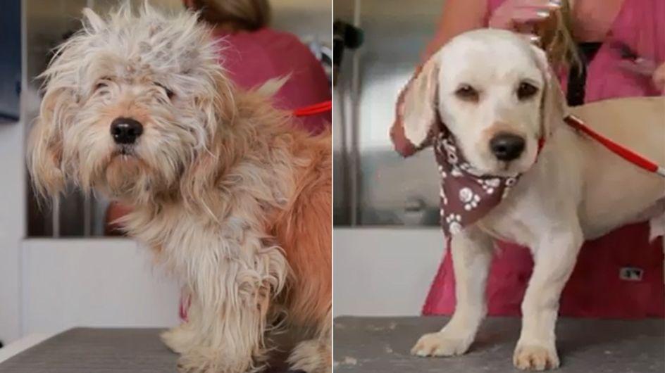 Jeder verdient eine zweite Chance: Die Verwandlung dieses Straßenhundes ist unglaublich!