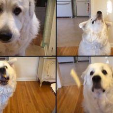 Video/ Imparare a prendere i croccantini al volo...anche per un cane può essere difficile!
