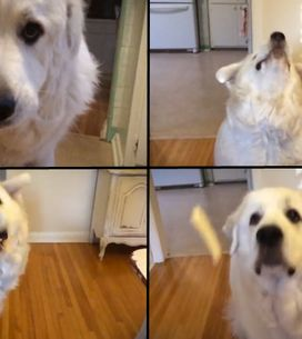 Video/ Imparare a prendere i croccantini al volo...anche per un cane può essere