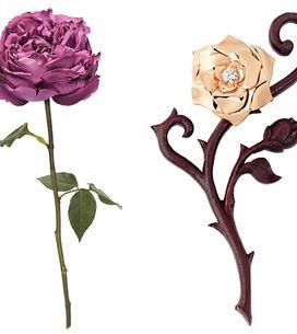 Les Roses Nouvelles de Genève: Envie de choisir VOTRE Coup de Coeur?