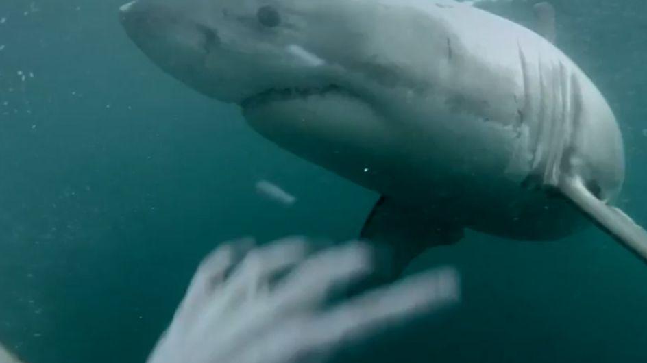 Krass! Was dieser Mann nach einem Sprung ins Meer erlebt, ist der absolute HORROR!