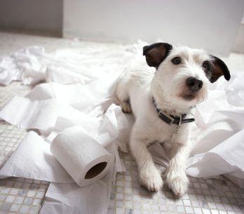 Come salvare la casa dall'arrivo di un cucciolo? Scopri le regole d'oro da segui