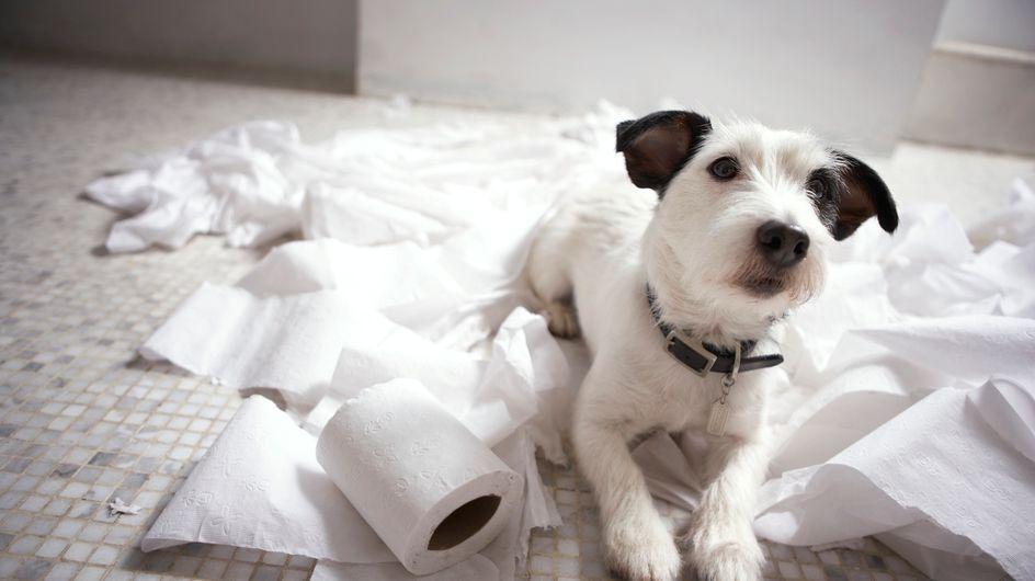 Come salvare la casa dall'arrivo di un cucciolo? Scopri le regole d'oro da seguire