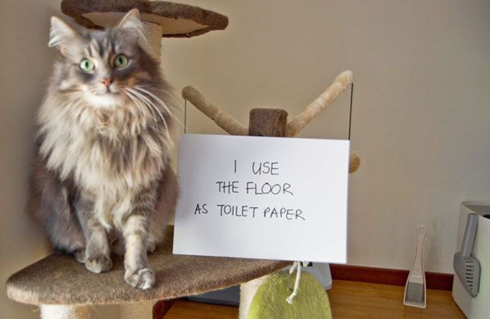 17 Pets That Needed To Be Shamed
