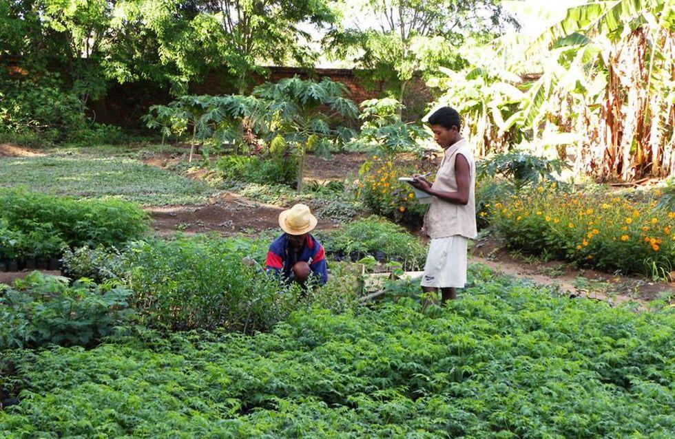 Davines devolve oltre 40mila euro a sostegno della foresta in Madagascar