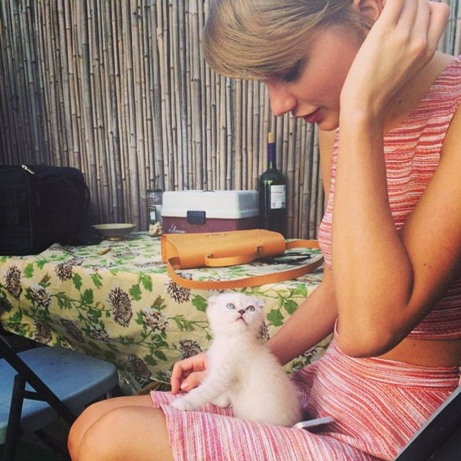 Taylor Swift et son nouveau chat