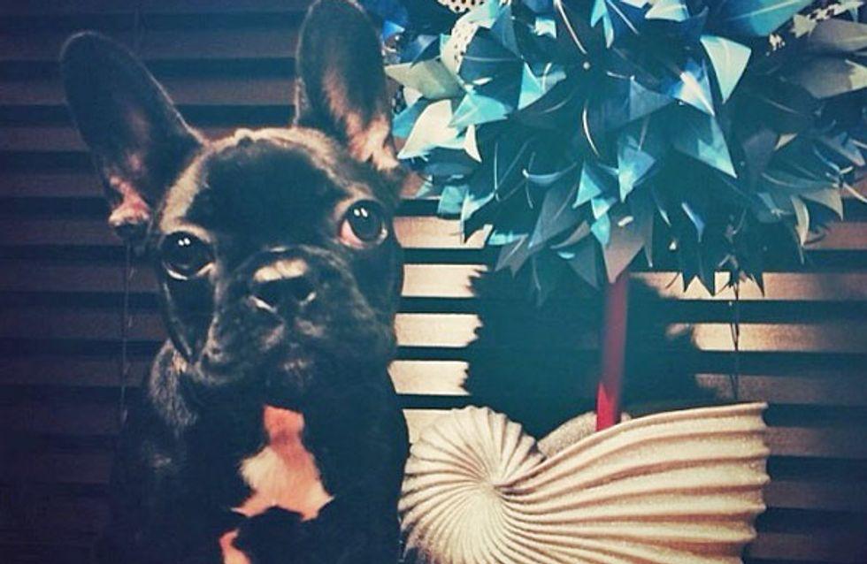 Asia Gaga: la nueva obsesión perruna de la diva