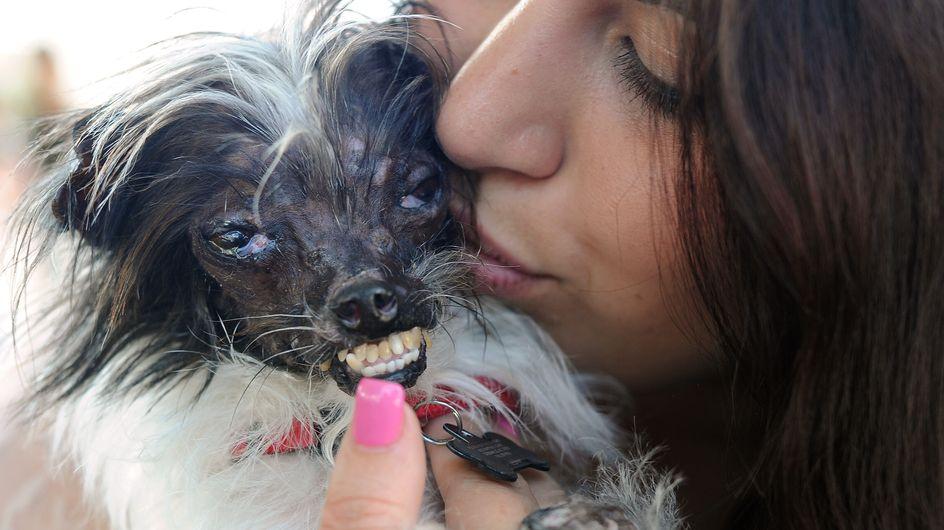 El perro más feo del mundo lucha contra el maltrato animal