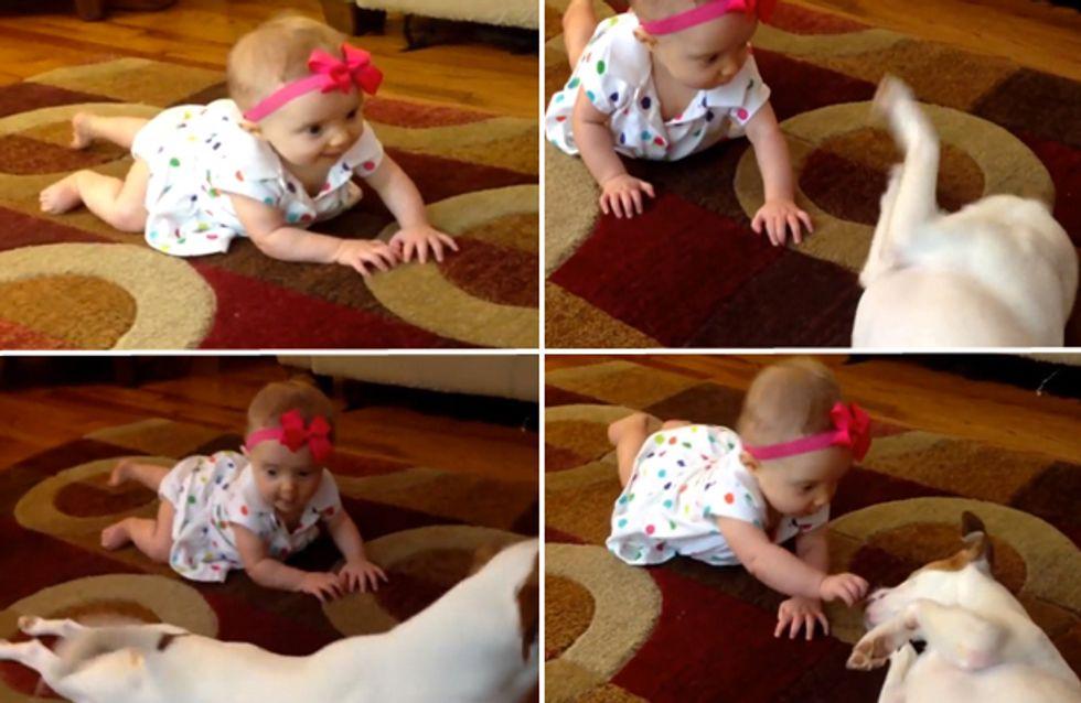 Video/ A lezione di gattonamento... dal cane di casa!