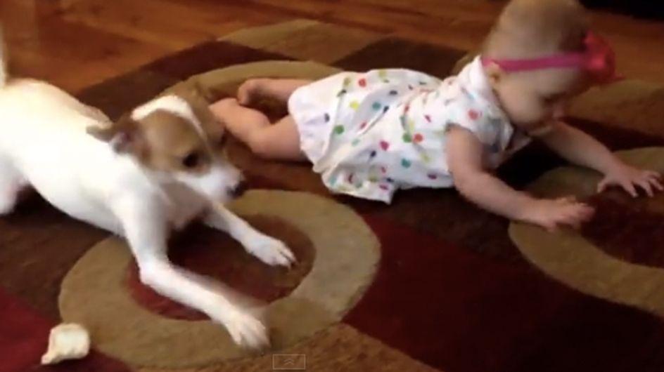 Un perrito enseña a una niña a gatear