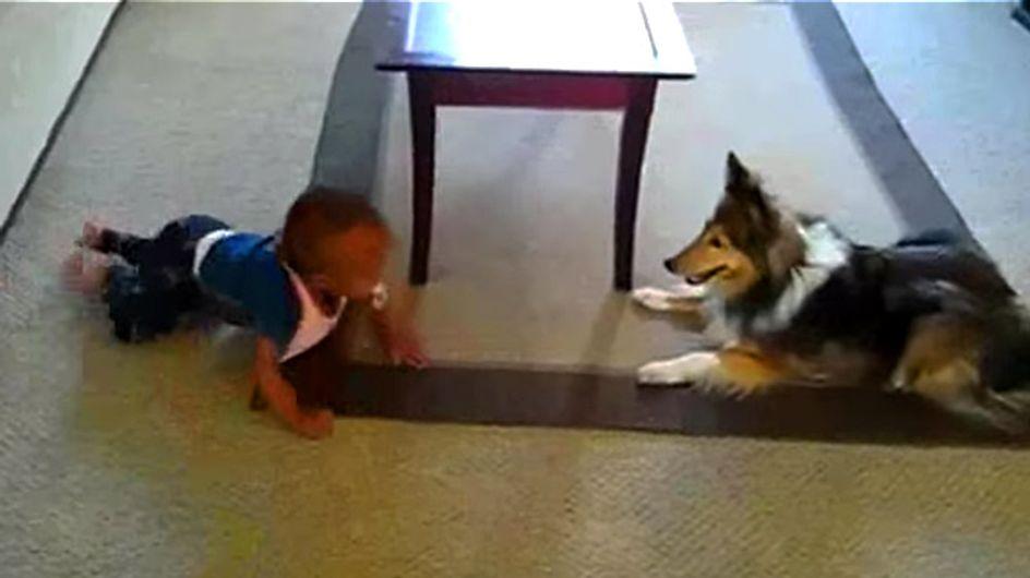 Wenn ihr das hier seht, wollt ihr sofort einen Hund als Babysitter haben!