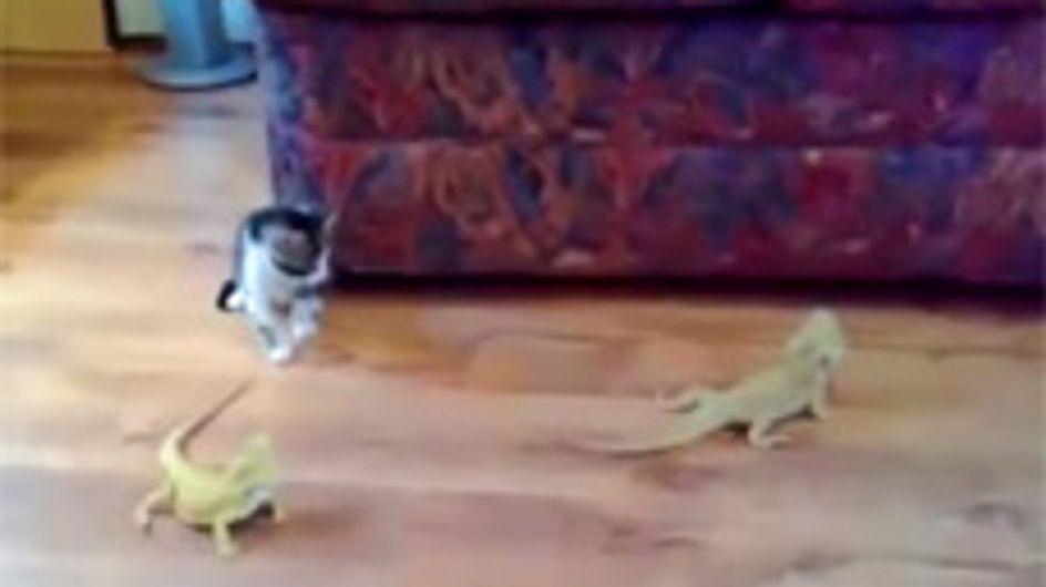 Sie wollte doch nur spielen! Was dieser süßen Babykatze dann passiert, ist für sie echt ein Schock ...