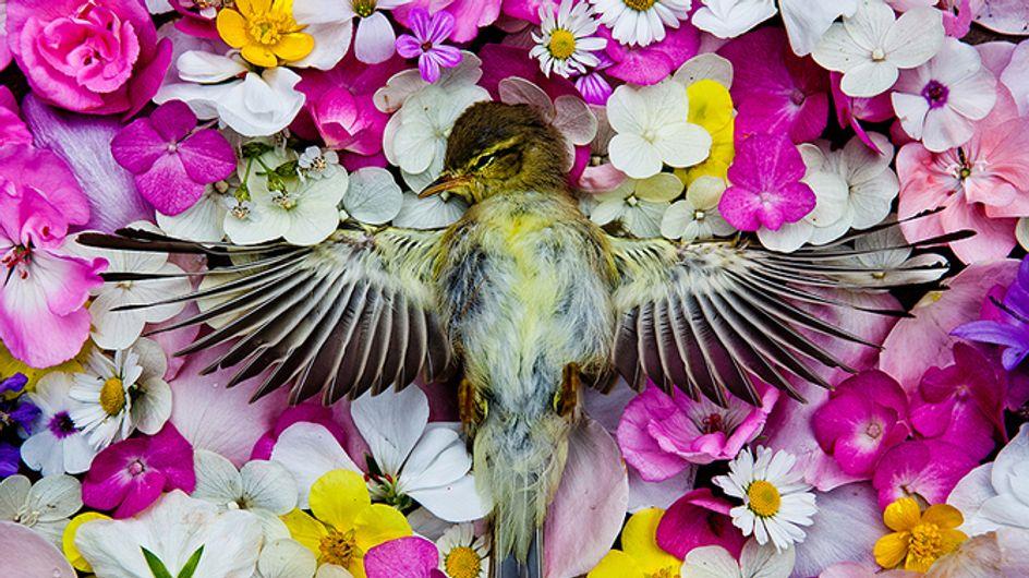 Traurig, aber wunderschön: Diese wilden Tiere finden ihre letzte Ruhe auf einem Meer von Blumen
