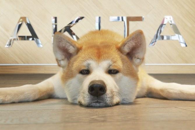 Akita, il primo lounge bar dog friendly