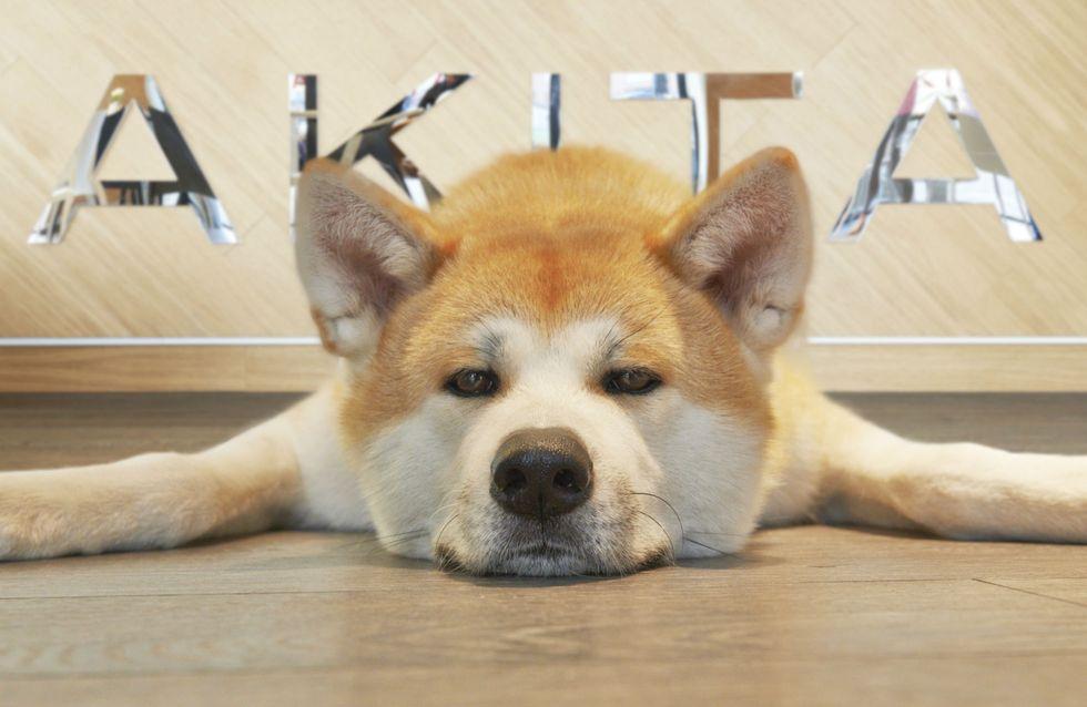 Apre Akita, il primo lounge bar dog friendly