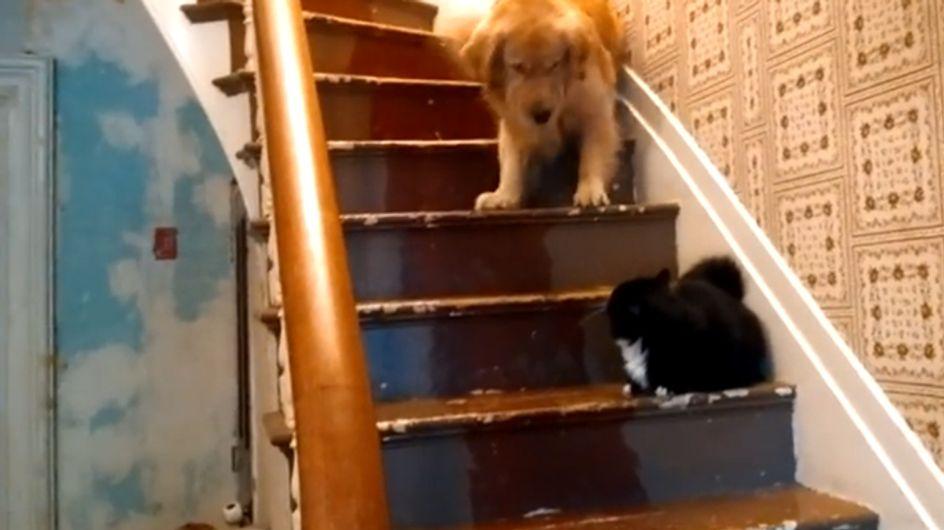 Dieser Hund ist der größte Angsthase der Welt! Ihr werdet nicht glauben, wovor er sich fürchtet!