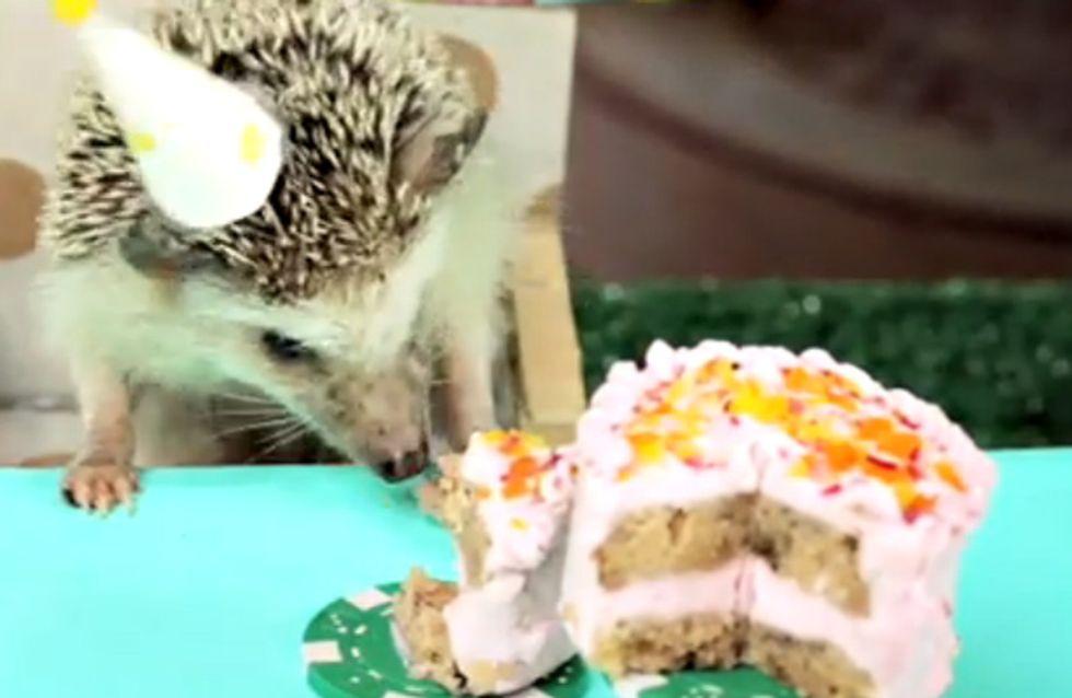 Happy Birthday, lieber Igel! Wir sind fast aufgeflippt, so süß ist die Igel-Geburtstagsparty!