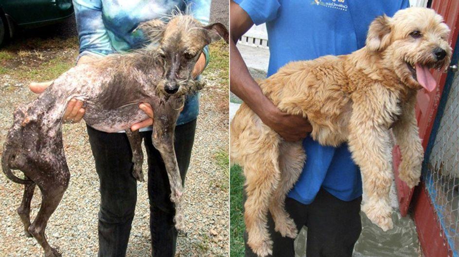 Helfer mit Herz: 10 UNGLAUBLICHE Vorher-Nachher-Bilder von Straßenhunden!