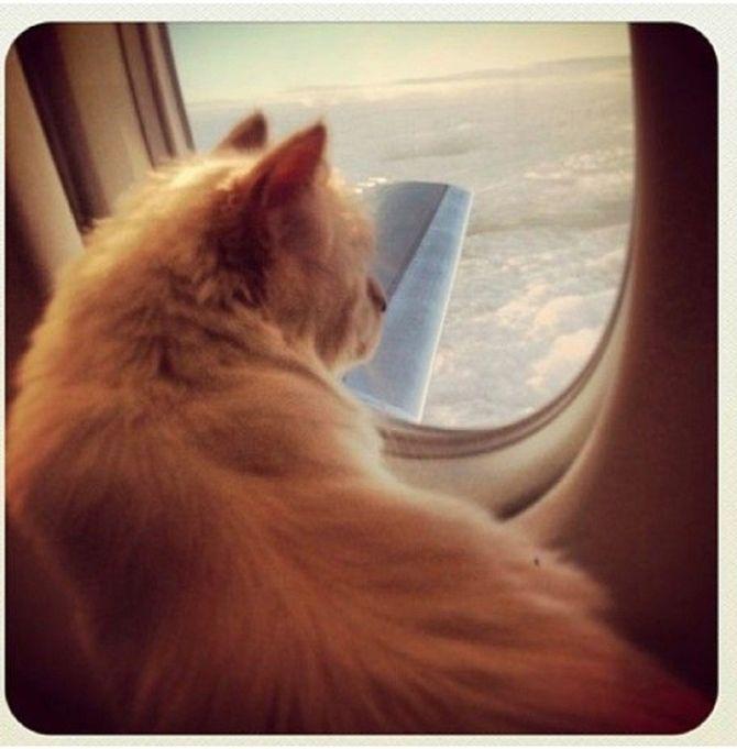 Choupette Lagerfeld dans un avion