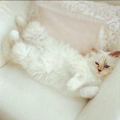 Choupette Lagerfeld : Un livre et une collaboration avec Shu Uemura pour le chat de Karl Lagerfeld