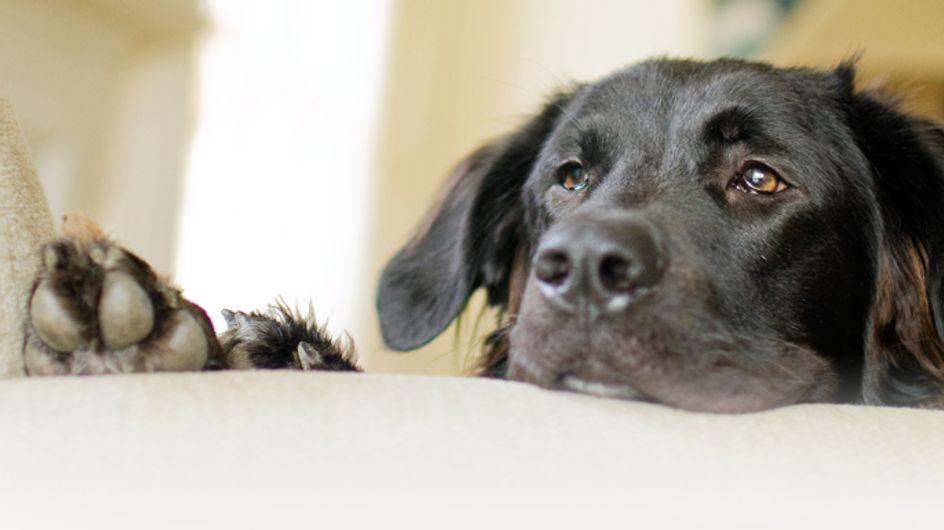 So rührend nimmt eine Familie Abschied von ihrem Hund