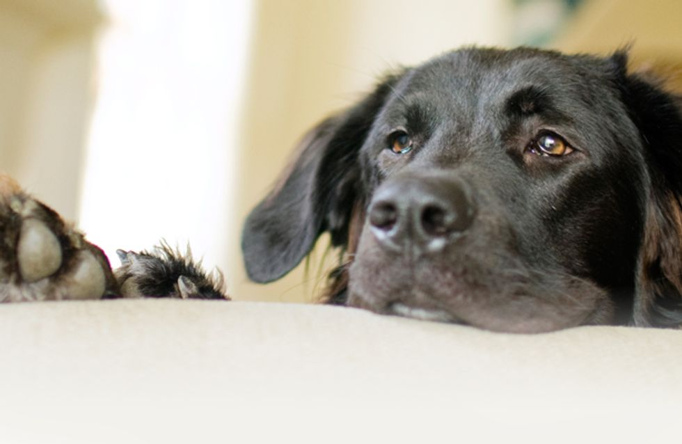 Der letzte Tag auf Erden - so rührend nimmt eine Familie Abschied von ihrem Hund