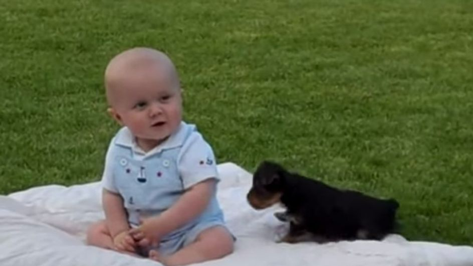 Welpe trifft Baby: Dieser Nachwuchs zaubert uns ein Lächeln ins Gesicht!!