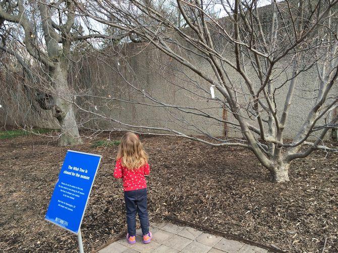 Annabelle Earl devant l'arbre à souhaits