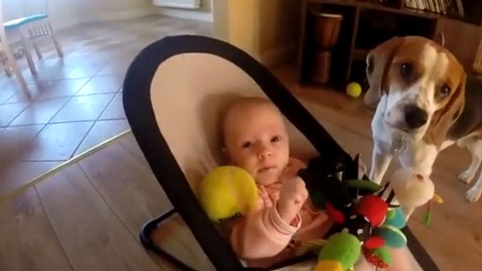 La historia del perrito que le pidió perdón a un bebé por robarle sus juguetes