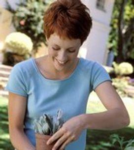 Marcotter vos plantes